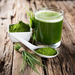 Pšenična trava in zeleno bogastvo klorofila